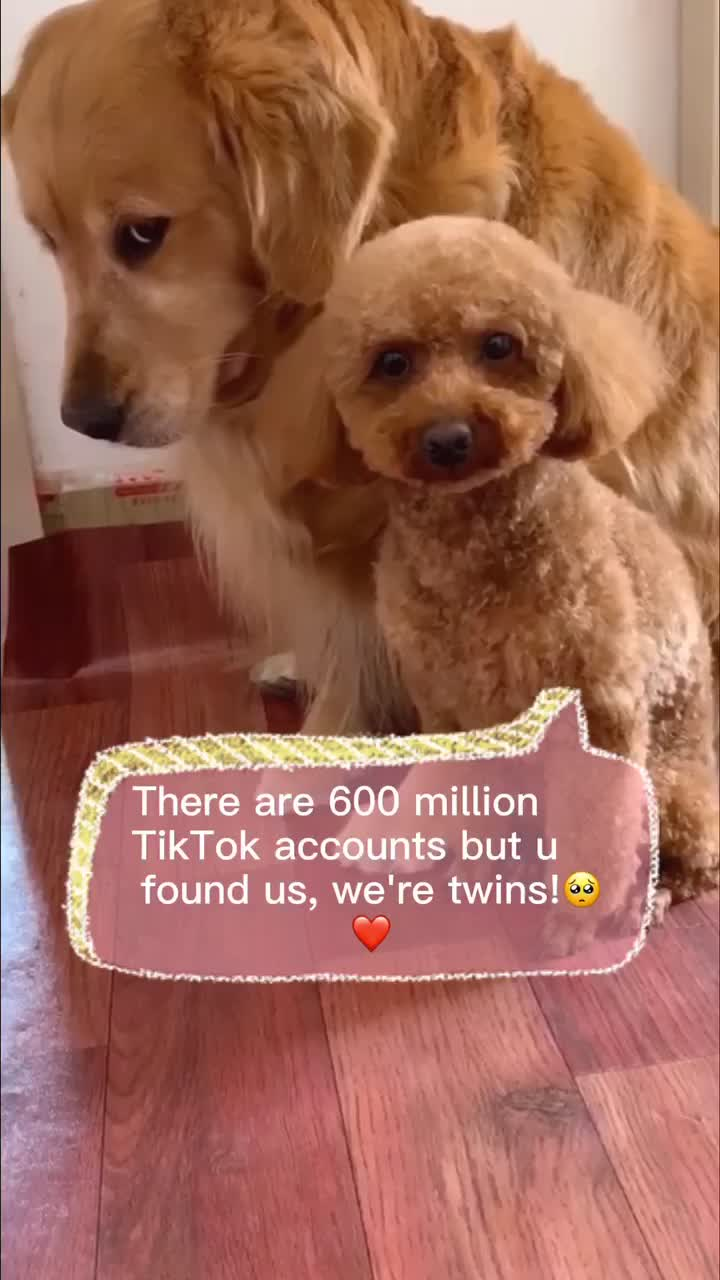 @petphotography TikTok Analytics