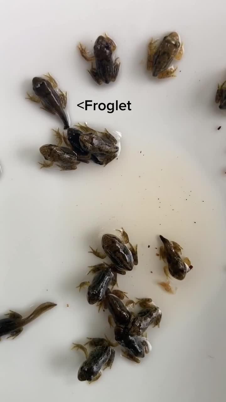 @.baby.frogs TikTok Analytics
